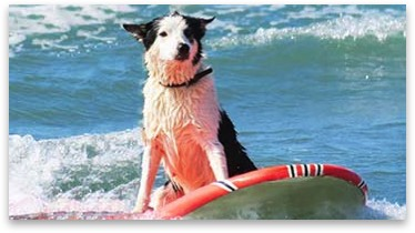 Nel Raven the Dog Surfing